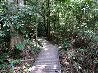 IMG_5208-jungle-walk
