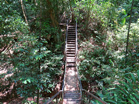 IMG_5210-jungle-stairs