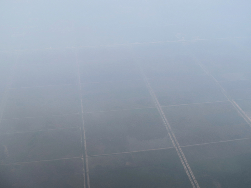 Palm oil plantations in the haze