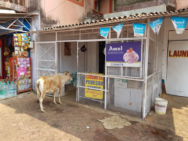 Cow at ice cream shop