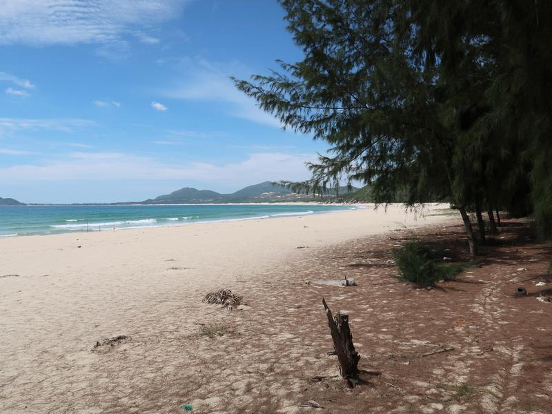 Vinh Hoa beach trees