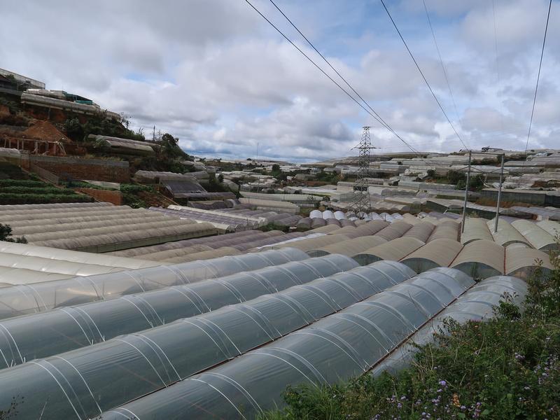 greenhouse hills