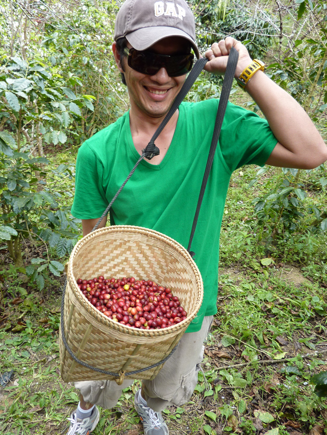 Basket of coffee cherries