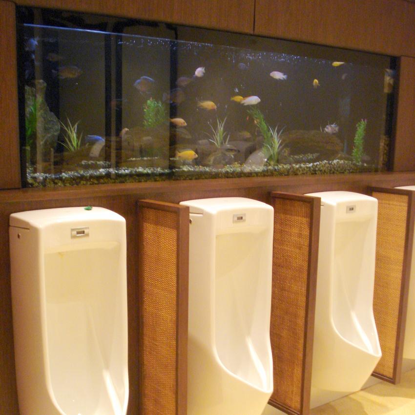 Tropical Fish Tank - Mens Toilet