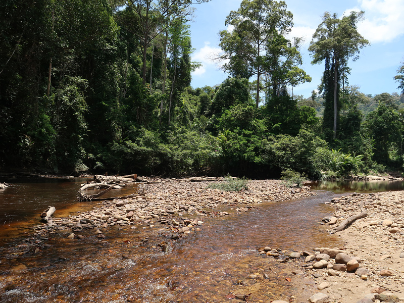 Taman Negara - the ancient rainforest in the heart of Peninsula Malaysia