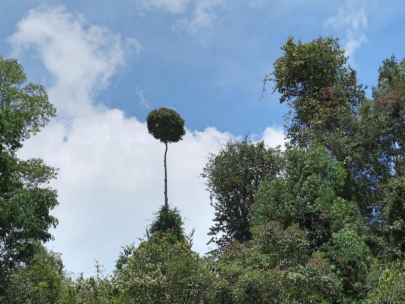 Emergent tree