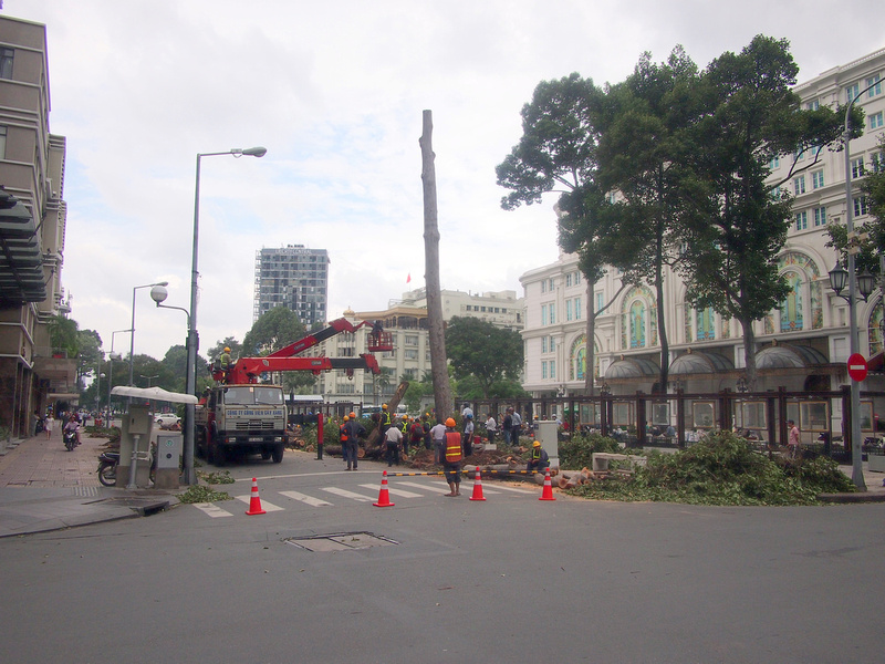 Cutting down trees at Opera