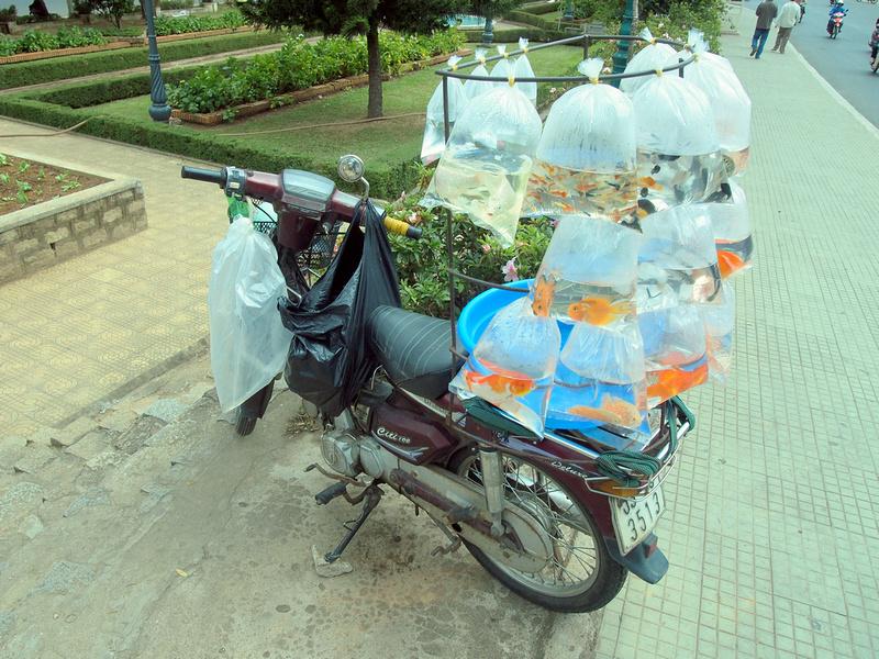 Moto fish shop - Dalat, Vietnam