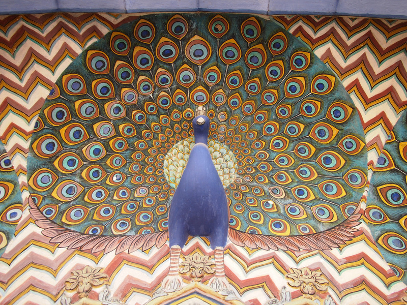 Peacock at City Palace - Jaipur