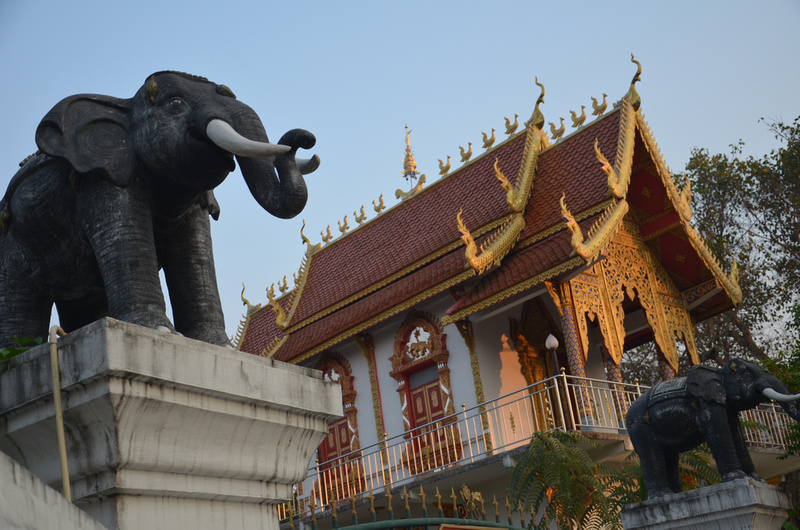 Elephants and Wat - Chiang Mai