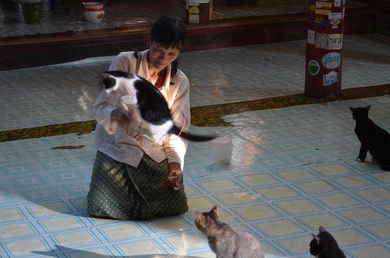Cats jumping at the Jumping Cat Monastery