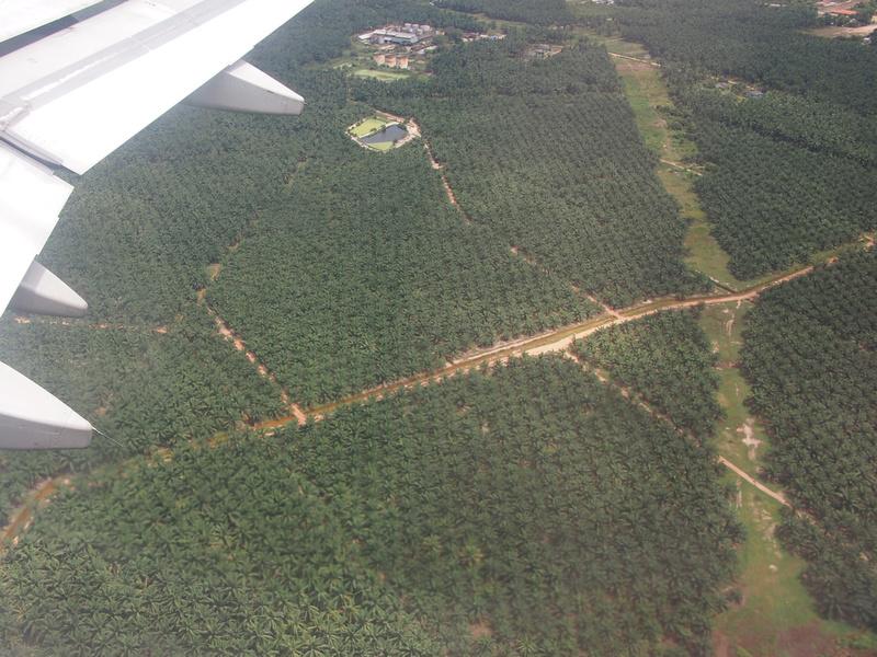Palm oil plantations of Malaysia