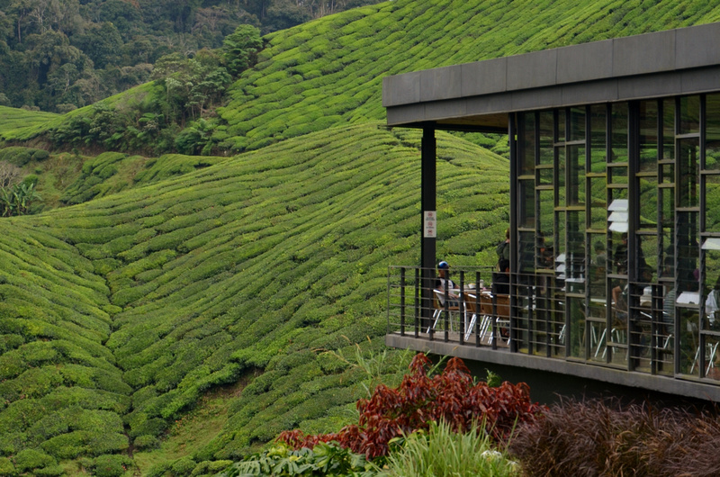BOH Tea Plantations