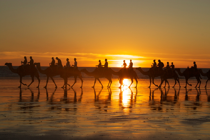 Camels in Australia