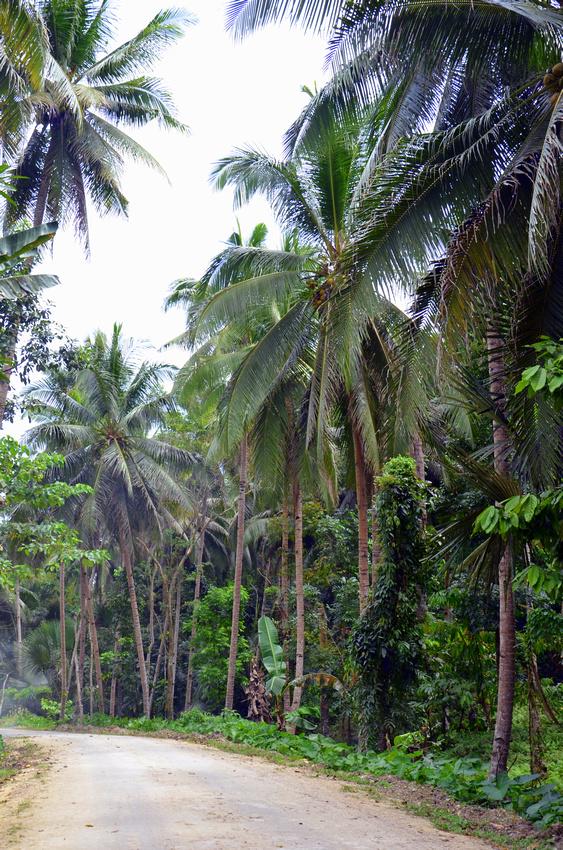The backroads of Bohol