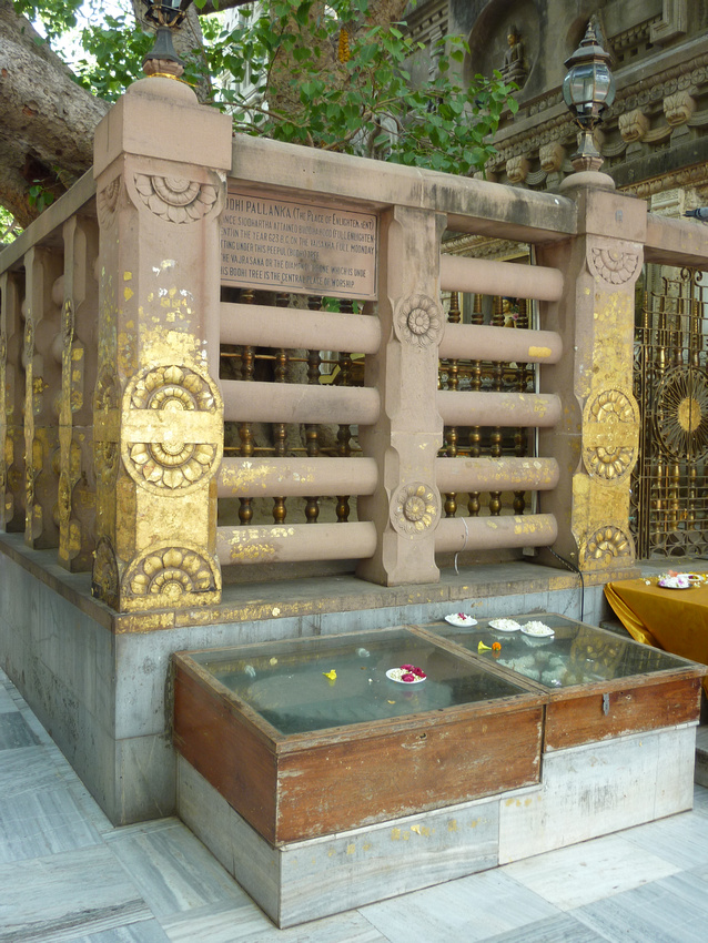 The Bodhgaya Bodhi Tree at Mahabodhi Temple