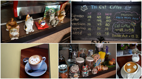 TH Cat Coffee - Chiang Mai