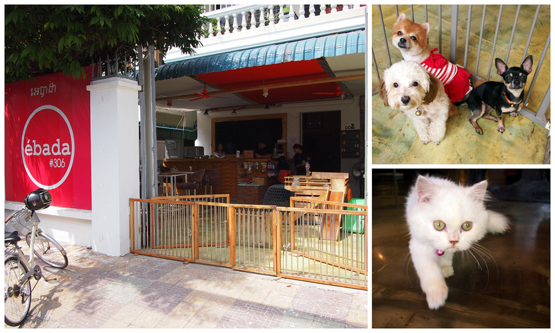 ebada pet cafe - Phnom Penh