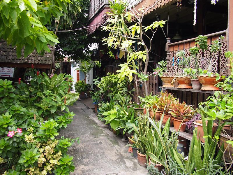 Madam Guesthouse garden