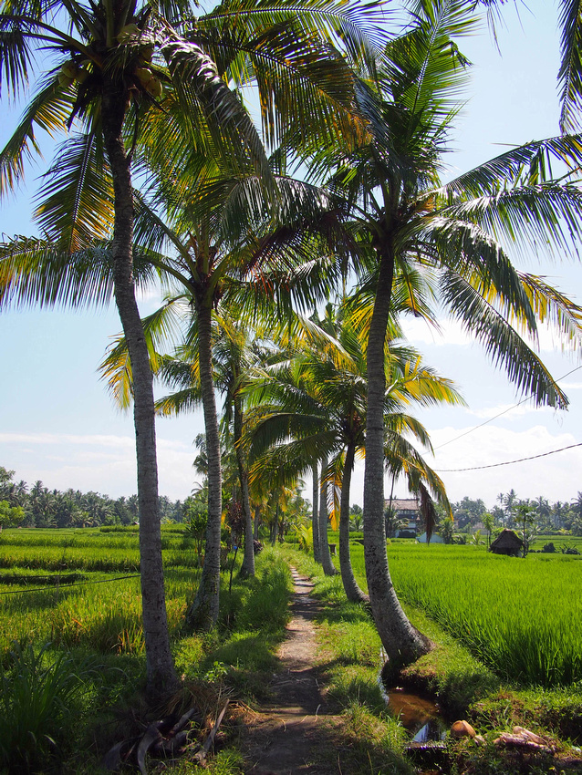 Walking in the rice fields, Ubud - Indonesia