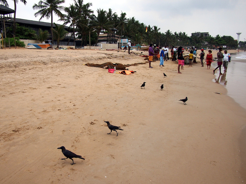 Colombo Crows