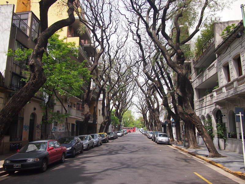Tree-lined Palermo